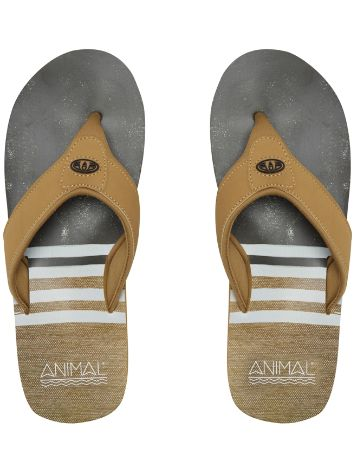 Animal Jekyl Swim Sandalias