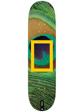 "Element Nat Geo Peacock 8.0"" Skateboard Deck"