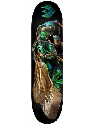 "Powell Peralta Biss Flight 242 Cuckoo Bee 8.0"" Skateboard D"