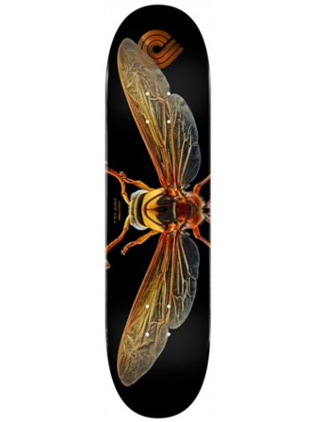 "Powell Peralta Levon Biss 247 Potter Wasp Popsicle 8.0"" Skateboard Deck"