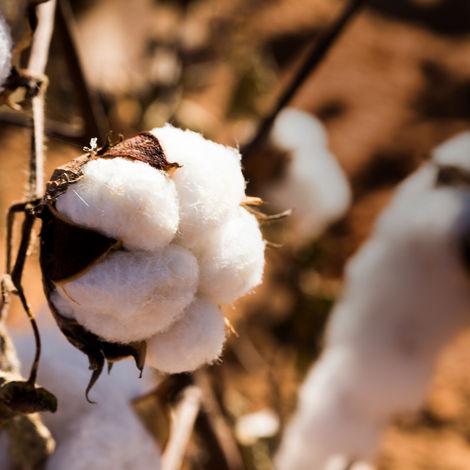 The beauty of organic cotton